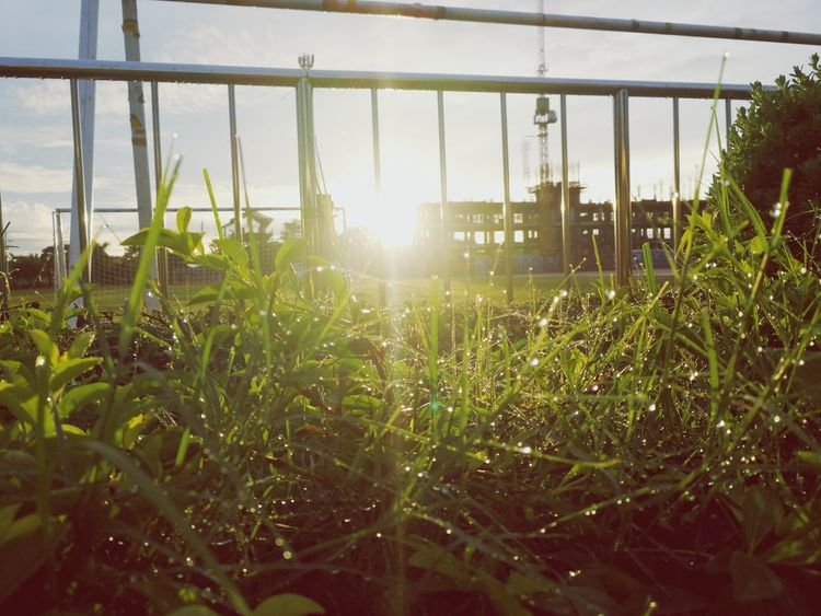 Grass Growth Plant Beauty In Nature Grass After Rain Dewdrops On Grass Green Color Sunrise_Collection Sunrisephotography Freshness