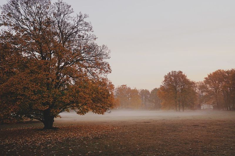 Nature Berlin Fog Colors Autumn Autumn Collection Tree Sky Plant Nature Tranquility No People Beauty In Nature Day Growth Land Scenics - Nature Tranquil Scene Copy Space Outdoors Field Landscape