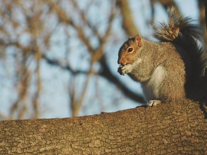 One Animal Animals In The Wild Squirrel Animal Themes Nature Mammal Day Outdoors Animal Wildlife Close-up Tree