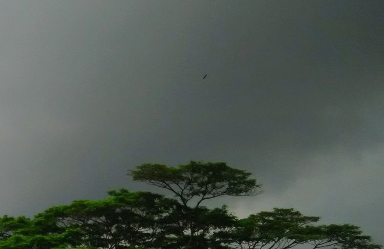 Flying High And Proud! Flying Higher Flying High In The Sky Bird Storm Cloud Stormy Clouds