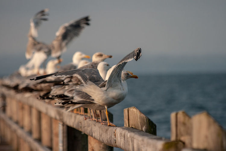 Seagulls perching on railing against sea