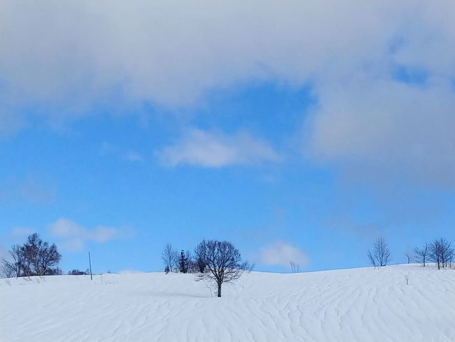 Japan Day Landscape Nature No People Outdoors Sky Snow Tree Winter