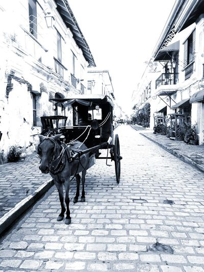 """A people without the knowledge of their past history, origin, and culture is like a tree without roots."" - Marcus Garvey Vigan Philippines Crisologo Street Wanderlust Culture And Tradition Old Town Philippines Philippines Photos Pinoypotograpiya Pinoywanderer First Eyeem Photo"