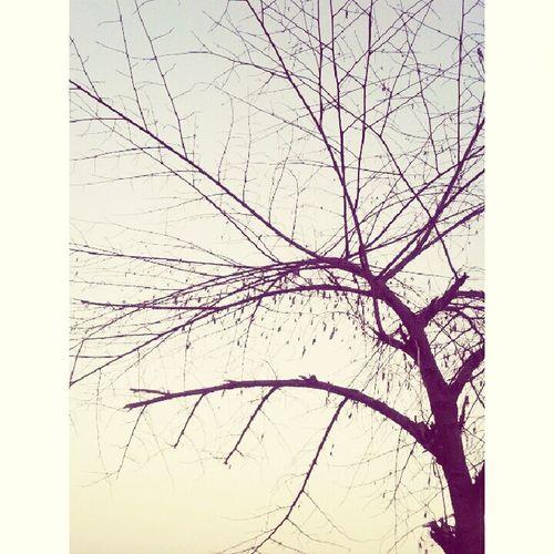 Godday!! Los árboles Del Presente Hermoso❤ Fallowme