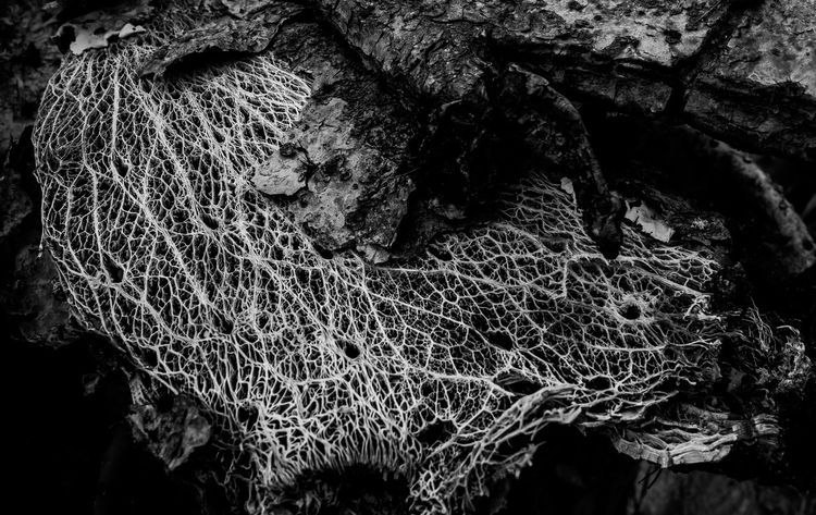 Guess what this is?? It's a skeleton of a dead cactus. Beauty lies in decay Be. Ready. EyeEm Nature Lover EyeEmNewHere Black And White Friday Veins Outdoors Old Nature Leaves Close-up Black And White Beauty In Nature Skeleton Plant Decay Cactus Black & White Crafted Beauty