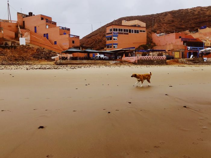 View of a dog in front of buildings
