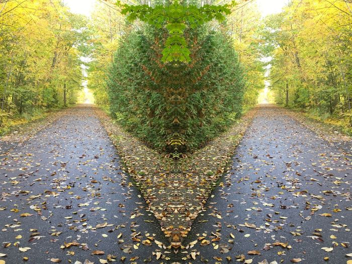 Mirror image Plant Nature Day No People Tree Outdoors Growth Sunlight Green Color Beauty In Nature Footpath