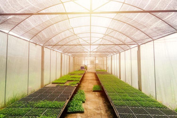 Empty corridor in greenhouse