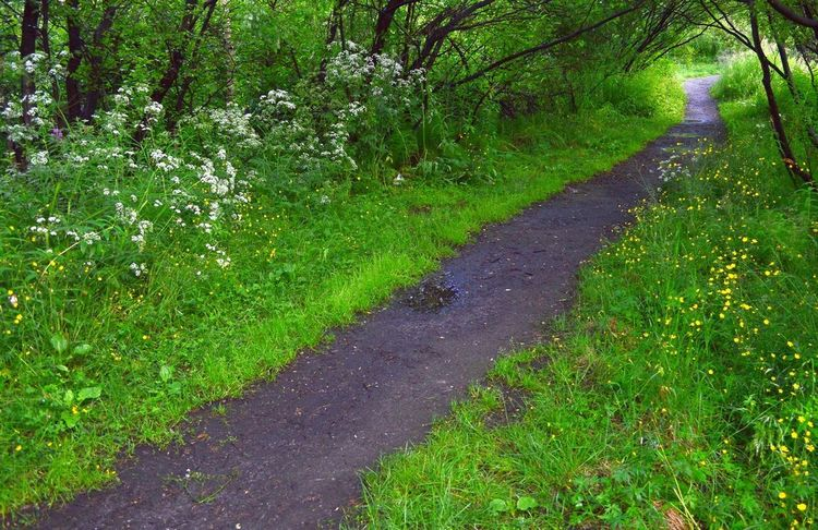 Forest path after rain. Beauty In Nature Day Forest Freshness Grass Green Color Growth Landscape Nature No People Outdoors Plant Road Scenics The Way Forward Tranquil Scene Tranquility Tree