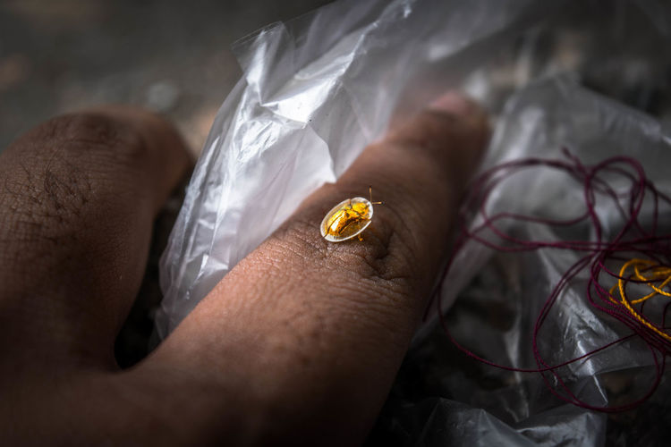Adult Close-up Day Golden Beetle Healthcare And Medicine Holding Human Body Part Human Hand Indoors  Insects  Men Needle One Man Only One Person People Real People