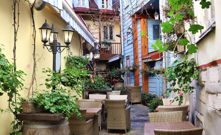 Potted plants on street against buildings in town