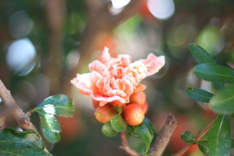 Close-Up Of Orange Flowers Blooming At Park