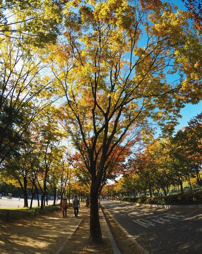 Tree Autumn Day Road Branch Tree Trunk Outdoors Nature Leaf Beauty In Nature Bare Tree Growth The Way Forward Tranquility Sunlight Scenics Real People Sky One Person Adult