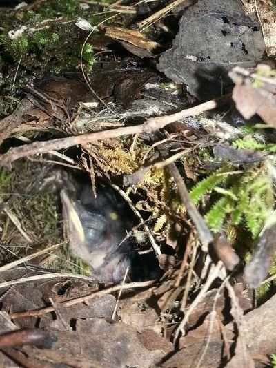 Nap time Wren Chick Baby Bird Nesting Nature