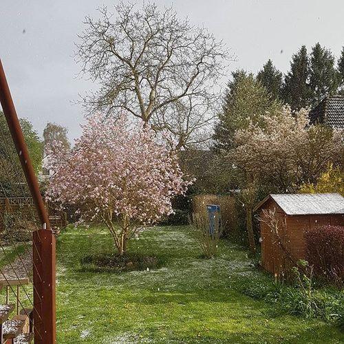 Schnee und Graupel Ende April in Lübeck 😯 Schnee Snow Graupel April Frühling Spring Winter