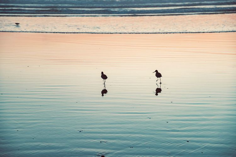 Bird Vertebrate Animals In The Wild Animal Themes Animal Wildlife Animal Water Group Of Animals Reflection No People Beauty In Nature Waterfront Nature Sea Day Outdoors Scenics - Nature