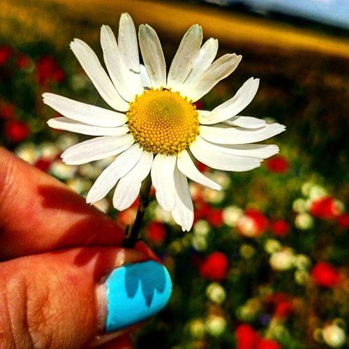 """""""Albowiem ja wiem, jakie myśli mam o was - mówi Pan - myśli o pokoju, a nie o niedoli, aby zgotować wam przyszłość i natchnąć nadzieją"""" Jr 29,11 Panie dbaj o moją przyszłość, daj mi nadzieję bo ja jej nie mam i nie widzę... Wiara Nadzieja Miłość Bog Biblia Słowo Boga Przyszłość Faith Hope Love Holy Bible BIBLEVERSE Jr29_11 Flower Beautifulworld Nature Field Corn Cornflowers Poppies  Instaflower Instanature Instadaily"""