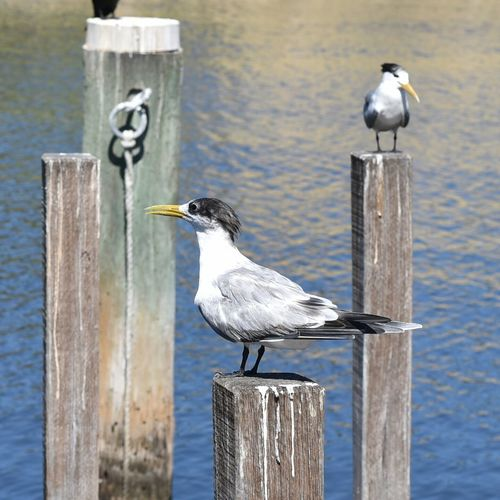Terns Perching On Wooden Posts In Sea During Sunny Day