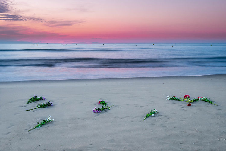 Flowers at the beach Beach Walk Colourful Lost Flowers StillLifePhotography Beach Beach Flowers Beauty In Nature Day Flower Horizon Over Water Long Exposure Nature No People Outdoors Religious Processions Sand Scenics Sea Sky Sunset Tranquil Scene Tranquility Vacations Water