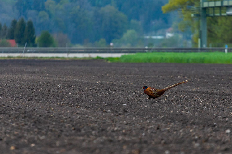 Close-up of a bird on the road