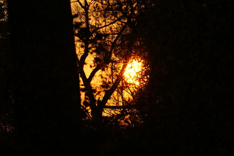 Tree Tree Area Forest Fire Sunset Silhouette Forest Heat - Temperature Burning Autumn Sky