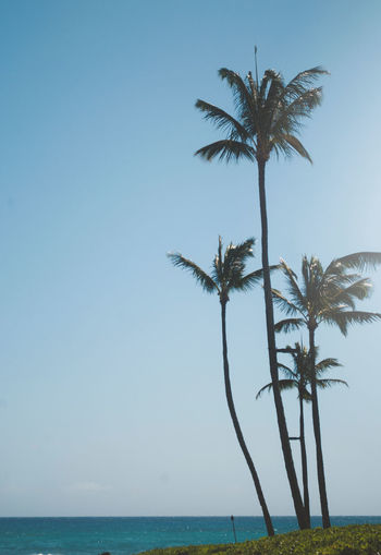Hawaii Life Hawaii Sky Palm Tree Water Tropical Climate Sea Tree Horizon Copy Space Land Nature Clear Sky Tranquil Scene Horizon Over Water Plant Beauty In Nature Scenics - Nature Tranquility No People Day Coconut Palm Tree