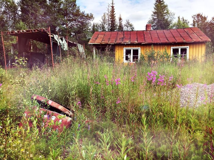 Liselotte Wajstedt Documentary Photography Scenography Vaja Productions Lappland Sweden Kiruna Sun Northen Empty Places Leftbehind Forgotten Sapmi Sami Flowers Summer Time  Landscape Small World Sky Flower Beuty Loneliness Altajärvi Summer ☀ Summer2016 Grass Eye4photography  EyeEm Best Shots EyeEm