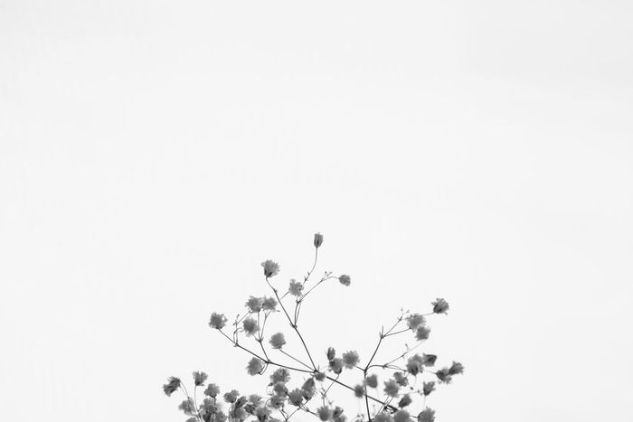 Abstraction Black & White Black&white Blackandwhite Composition Decoration Design Flower Flowers Flowers,Plants & Garden Geometry Innocence Minimal Art Minimalism Minimalism_bw Objects Purity Tenderness Things Things That Are Green
