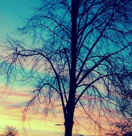 Nature My
