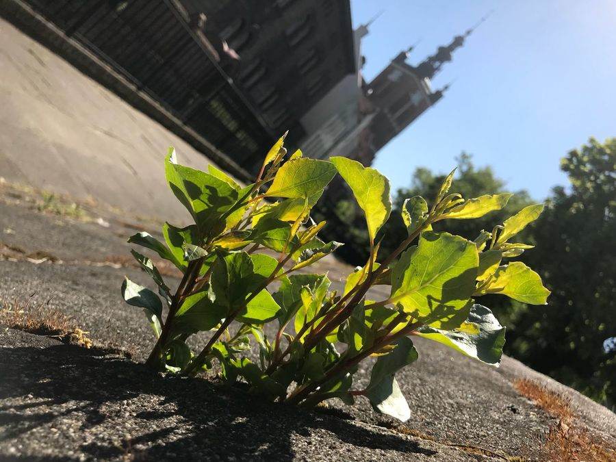 Plant Sunlight Growth Architecture Nature Built Structure Day Building Exterior No People Leaf Plant Part Green Color Outdoors Sky Focus On Foreground City Close-up Shadow Sunny Tree