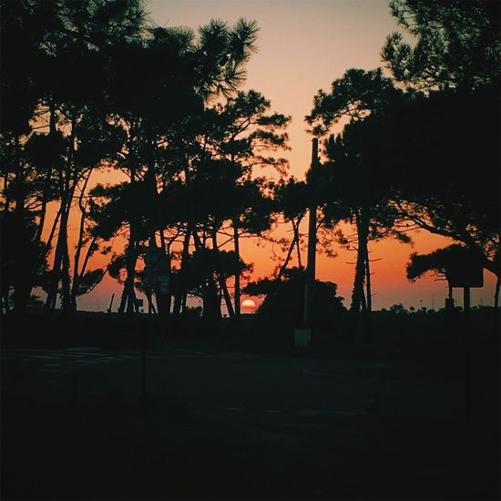 Tree Sunset Nature Beauty In Nature Tranquil Scene Anglet France