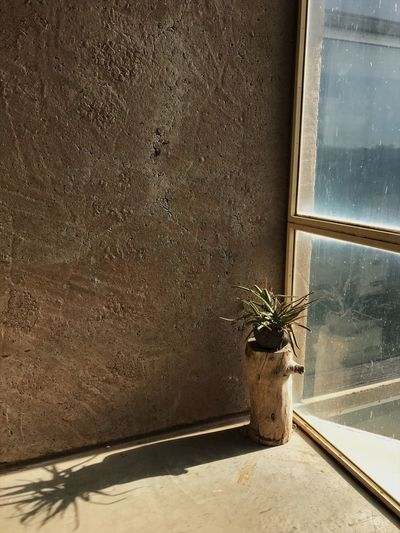 Arcosanti Arizona Plant Shadows & Lights Shadow Window Plants Photography Day No People Window Sill Indoors  Architecture Nature Close-up The Graphic City