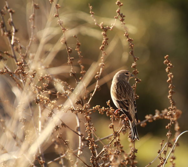 Bestoftheday Bird Bird Photography Brown Daylight Depth Of Field Nature No People