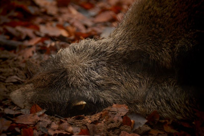 Wild wild... Nature Photography Photography Vs. Depression No People Animal Animal Themes Animals In The Wild Animal Wildlife Close-up Nature One Animal Animal Body Part Leaf Dirt