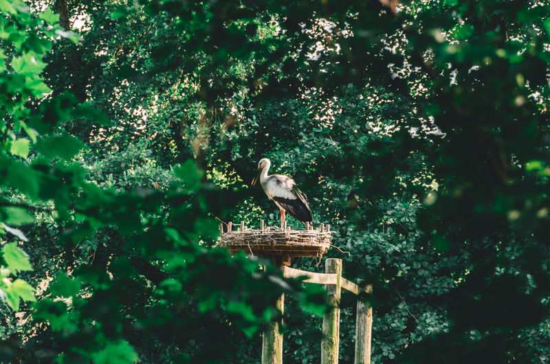 Animal Animal Themes Animal Wildlife Animals In The Wild Beauty In Nature Bird Day Eagle Green Color Low Angle View Nature No People One Animal Outdoors Perching Plant Selective Focus Sunlight Tree Vertebrate Zoology