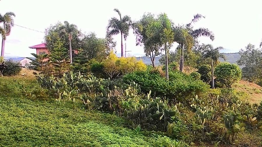 Beauty In Nature Branch Change Day Forest Green Green Color Growing Growth Leaf Lush Foliage Nature No People Outdoors Plant Relaxing Moments Tree Tree Trunk Tropical Climate Rizal Philippines Enjoyment Philippines In Philippines Enjoying Life