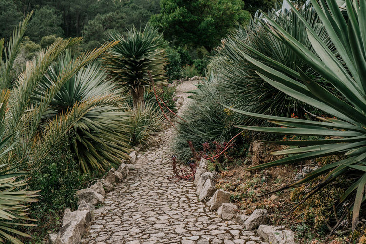 mexican garden Mexican Garden Garden Photography Plant Leaves Path Pathway Stones Wild Nature Plants Growth Palm Tree Beauty In Nature Green Color Tropical Climate No People Outdoors Scenics - Nature Footpath The Way Forward Tranquility Direction