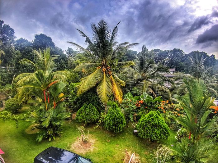 morning view EyeEmNewHere Garden Morning Sky Frontyard Sky Clouds And Sky Trees Green Color Nature Beauty Sri Lanka First Eyeem Photo
