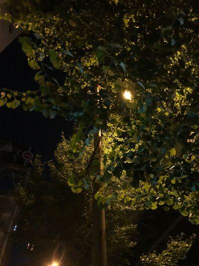 夜の道、街灯を追って、追って、真夜中の25時、車は未だに走っていて、隣の横断歩道にたむろする若者たち、月の光はこの街には勝てず、この季節の夜風は気持ちいいわけでもない Illuminated Night Plant Tree No People Lighting Equipment Growth
