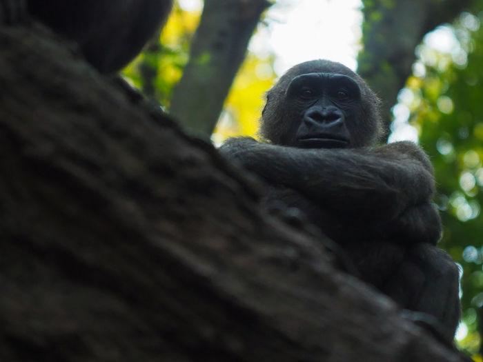 Portrait of man sitting on tree