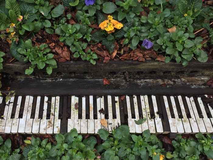 An old piano full of flowers and plants Urban Spring Fever Piano Flowers Plants And Flowers Plants Spring Music Spring Symphony