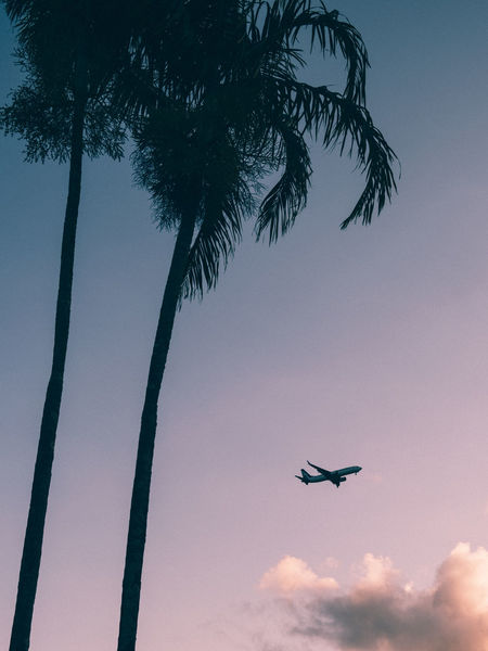 Air Vehicle Sky Tree Low Angle View Airplane Transportation Mode Of Transportation Cloud - Sky Nature Flying Plant Palm Tree Tropical Climate Mid-air Silhouette Outdoors Day Travel Journey Palm Leaf