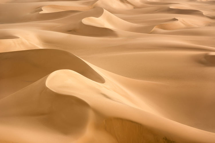 White Desert Dunes Desert Desert Beauty Desert Landscape Deserts Around The World Dunes Dunescape Golden Hour Landscape Landscape Photography Landscape_photography Nature Nature Photography Nature_perfection Naturelovers Naturephotography Sand Sand Dune Sand Dunes Sanddunes Structures & Lines Sunlight Sunrise Travel Destinations Travel Destinaton Travel Photography EyeEmNewHere EyeEmNewHere Perspectives On Nature