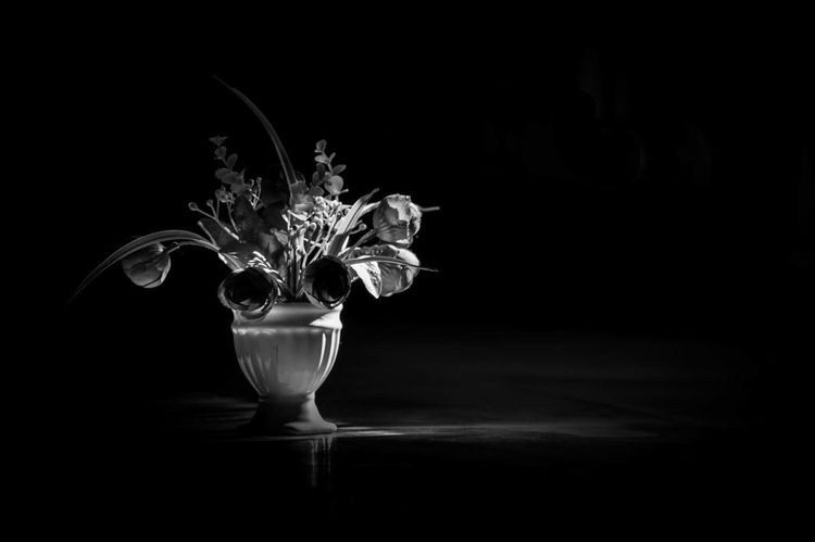 Black Background Flower No People Fragility Flower Head Blackandwhite Black & White Blackandwhite Photography Black And White Photography Bnw Black And White Friday