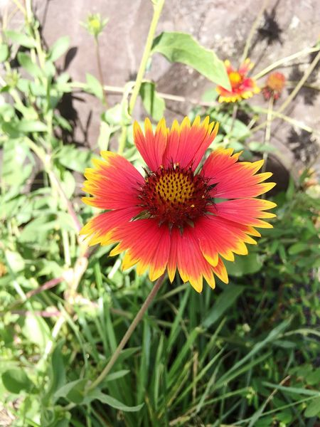 Gerbera Flower Flowers Flower Collection Nature Red Beautiful