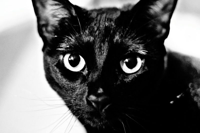 Monochrome Photography Night No People Nature Close-up Darkness And Light Cats Of EyeEm Cats 🐱 Black Cat Is Just So Beautiful. Black Cats Lovers Black Cats Black&white Black Cats Are Beautiful Black Cat Keeping Watch Pet Portraits