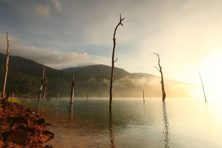 Beautiful landscape with fog and dead trees on a water dam in the morning light of Thailand Mountain Sky Tranquility Tranquil Scene Cloud - Sky Scenics - Nature Beauty In Nature Water Nature Reflection Non-urban Scene Environment No People Idyllic Outdoors Land Tree Plant Fog Sunrise Sunset