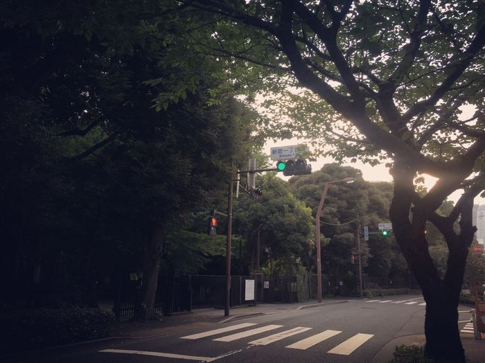 Tree Transportation Road Day Road Sign Stoplight Outdoors No People Branch Sky Japan Sunset