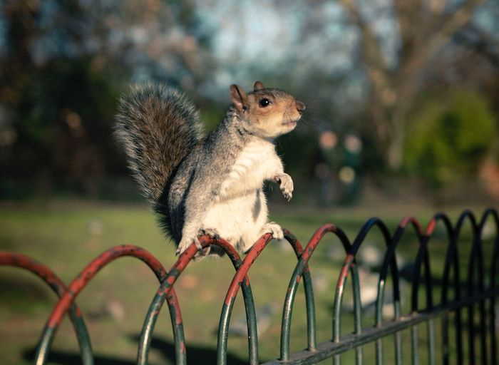 Squirrel in da city Animallover Highquality 2470mm Sonyalpha7III Cutie Animal Animal Themes One Animal Animal Wildlife Rodent No People Focus On Foreground Squirrel Animals In The Wild