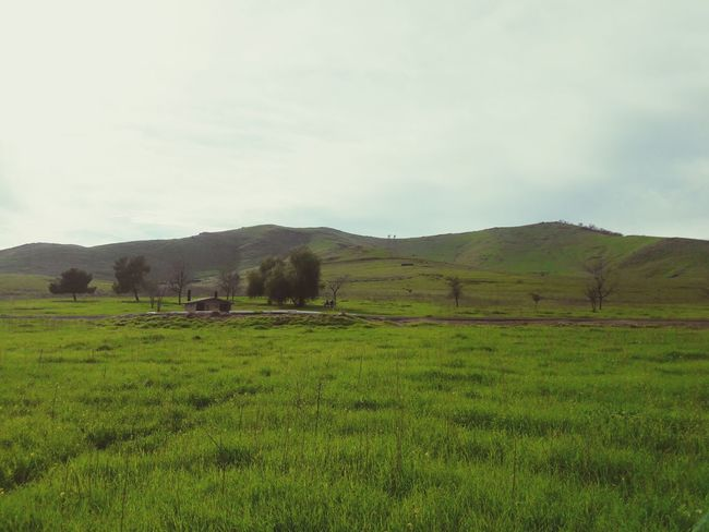 Landscape Agriculture Social Issues Sky Field Nature Cloud - Sky Rural Scene Outdoors No People Scenics Mountain Rice Paddy Tea Crop Lush - Description Day EyeEmNewHere